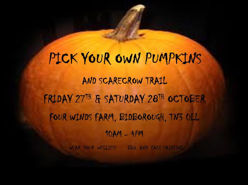 PUMPKIN BIDBOROUGH